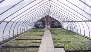 Ventilate-greenhouses-with-air-cleaning-blowers