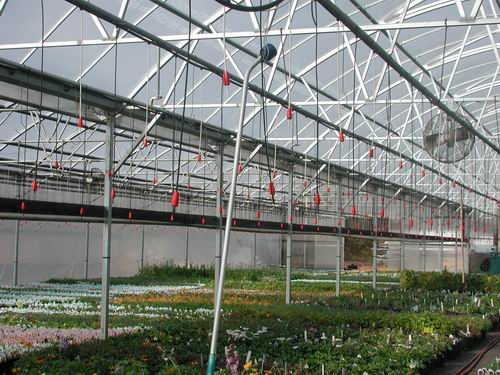 large-commercial-greenhouse-with-plants-inside